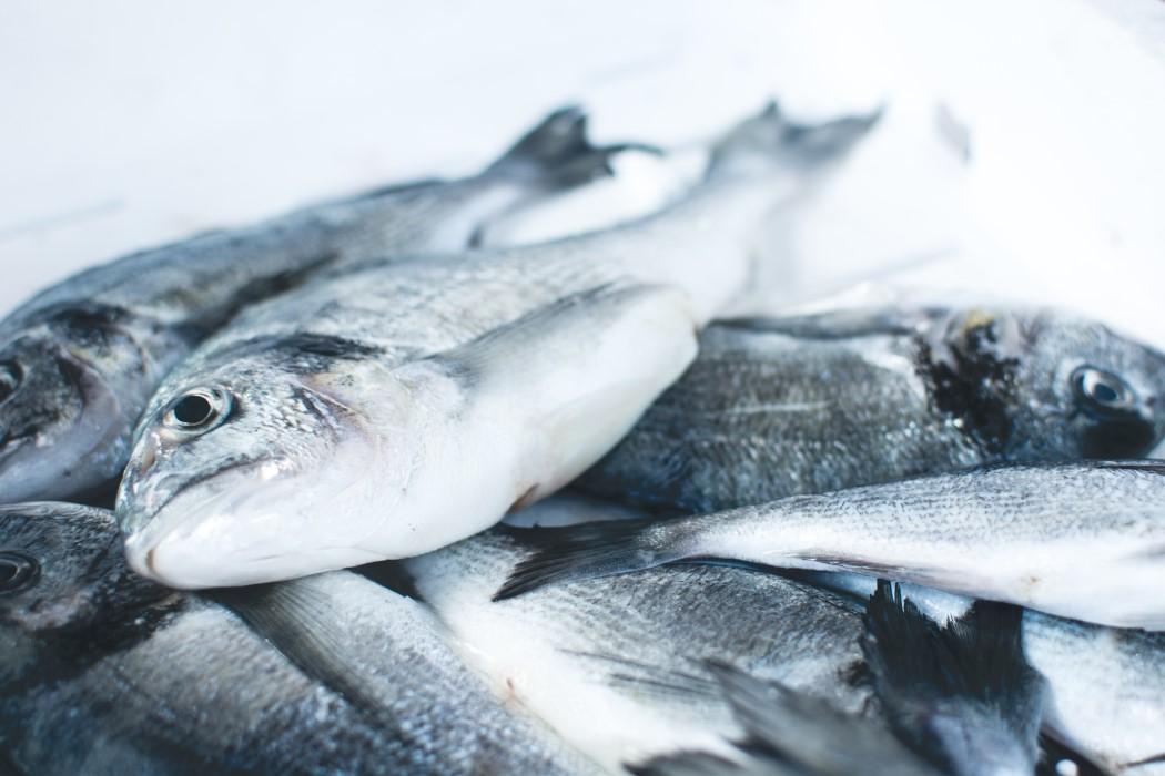 Cuándo introducir el pescado a tu bebé