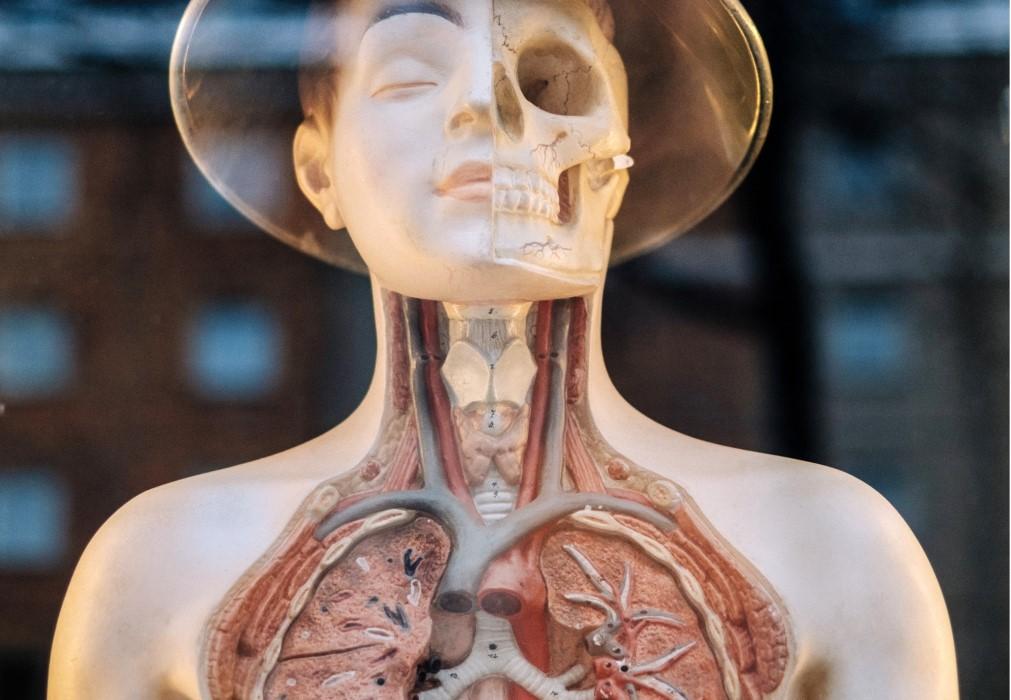 Cuál es el tratamiento para el hipotiroidismo