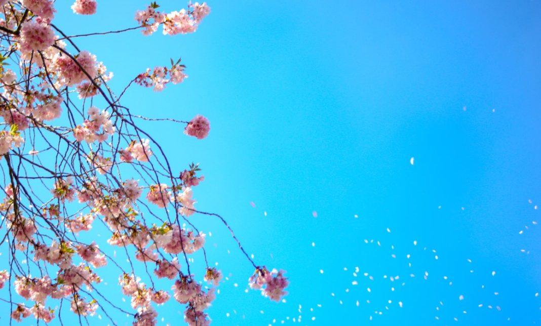 sintomas alergia primaveral
