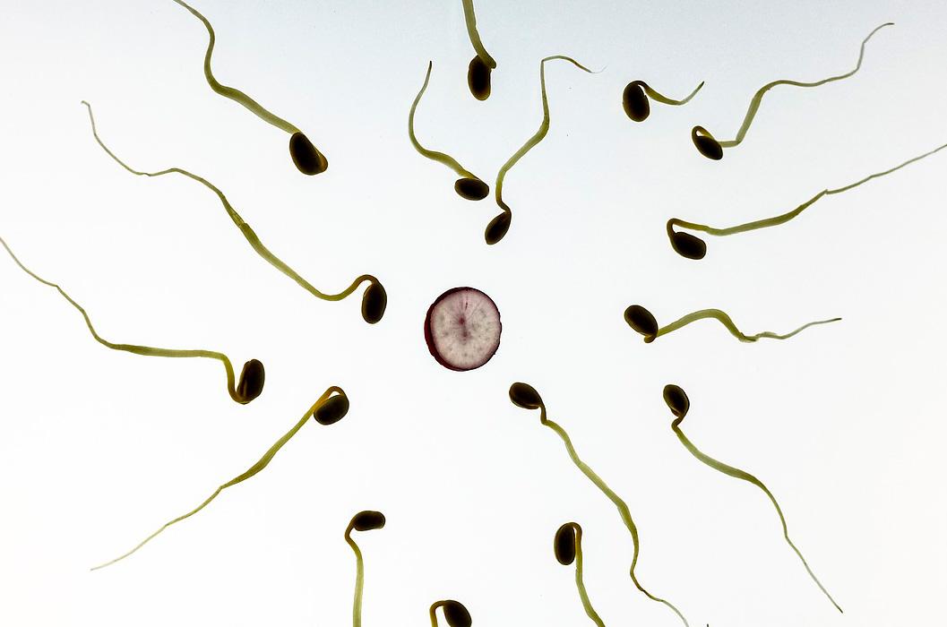 La relación entre la temperatura basal y la fertilidad